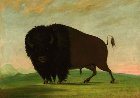 Picturing the American Buffalo: George Catlin and Modern Native American Artists